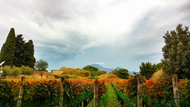 Take a stroll through the bubbliest part of Italy - The Prosecco Road
